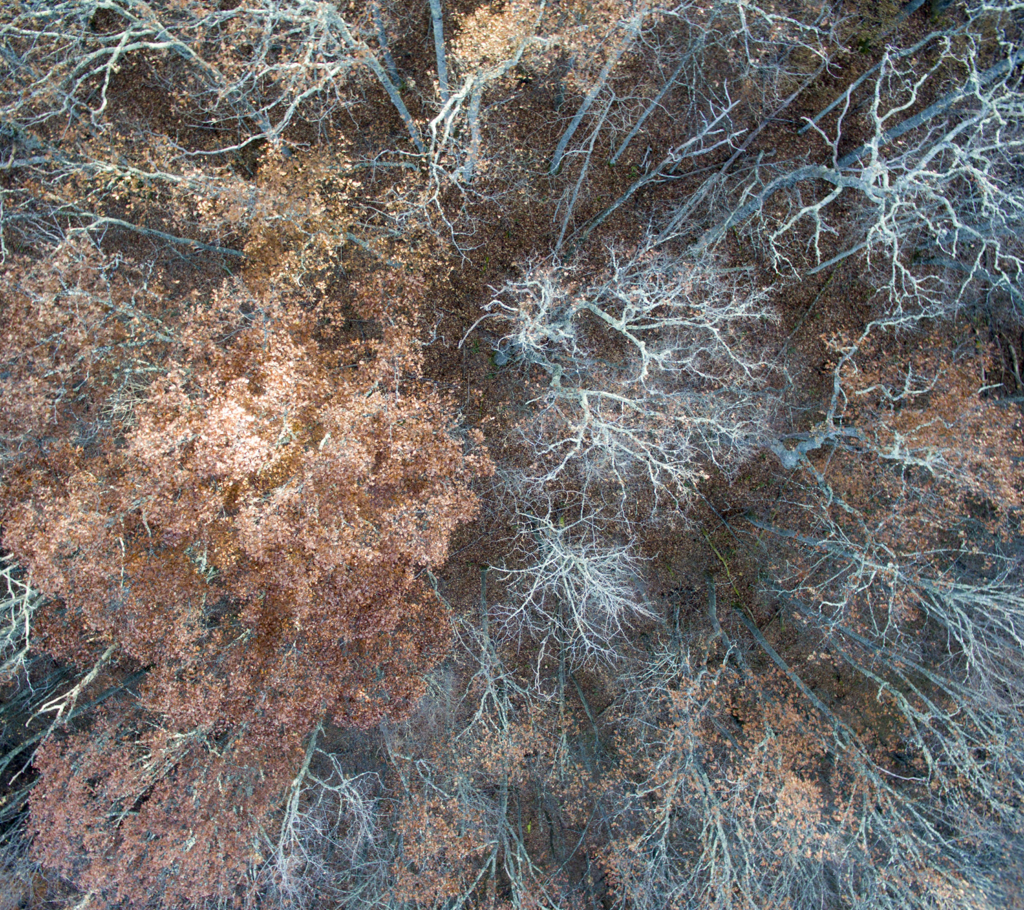 balsam woods drone 36x32